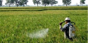 Bahan Kimia Insektisida Bisa Menyebabkan Diabetes