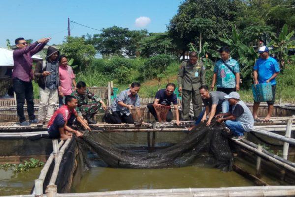 APP-IKPP pelatihan budidaya ikan lele