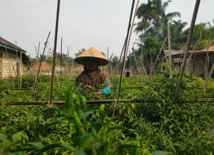 Salah satu aktivitas warga Desa Sungai Keruh